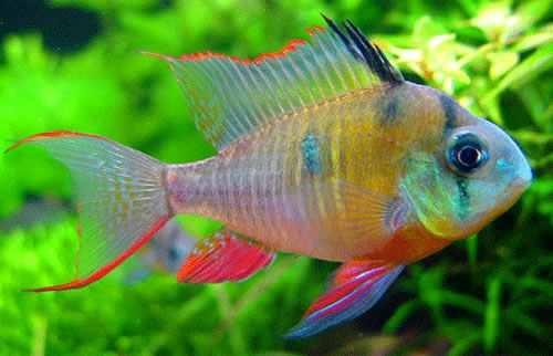 20 Gallon High Stocking Betta Fish And Betta Fish Care